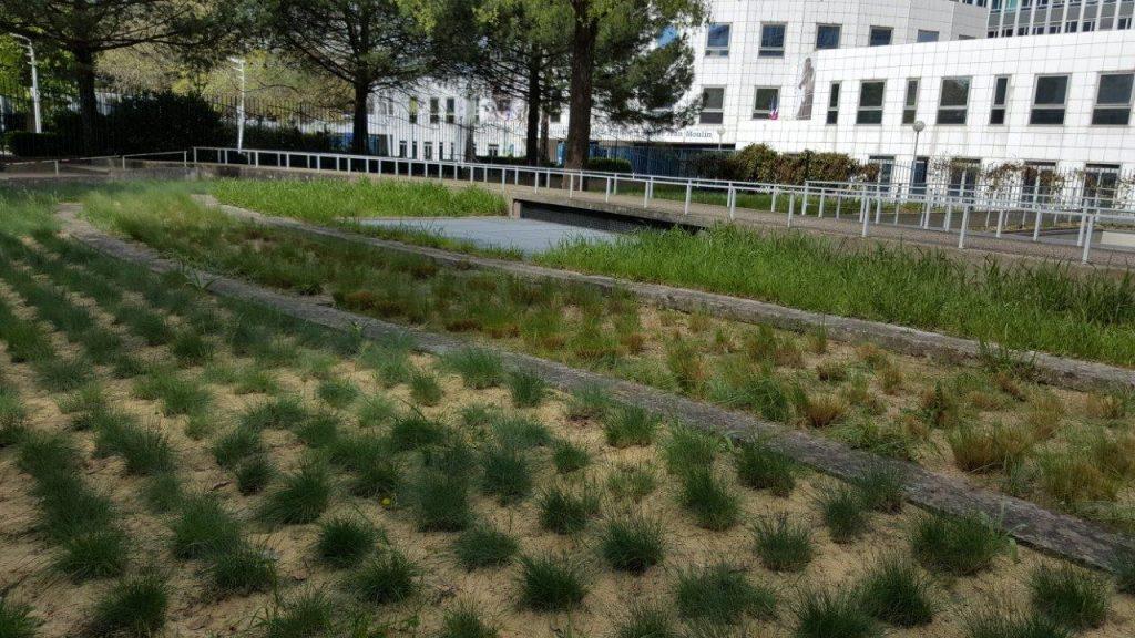 zone de plantes ondoyantes